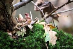 Dans un petit nid de mousse - Thierry GORDIEN